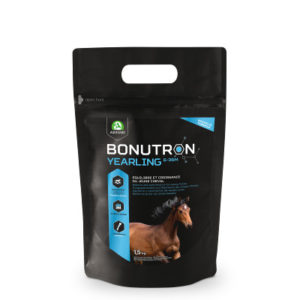 cheval-audevard-bonutron-yearling