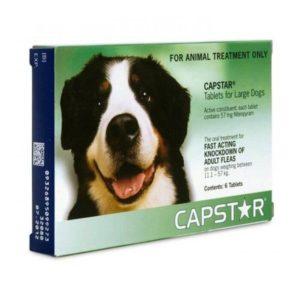 Univers-veto-Capstar traitement anti puce pour chien