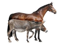 Chevaux et ânes