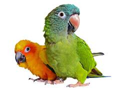 Oiseaux et pigeons