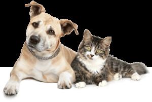 vermifuge chiens et chats