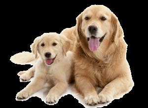 chienne et son chiot vermifuge parasite