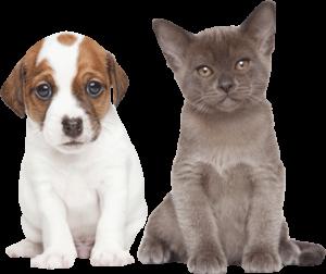jeunes chiots et chatons vermifugé