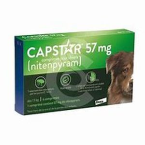univers-veto-capstar-traitement-anti-puce-infestation